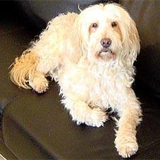 Hundewellness Salon Sunrico Bildergalerie Kundenhunde Mischlinge